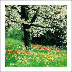 fiori millefiori.jpg